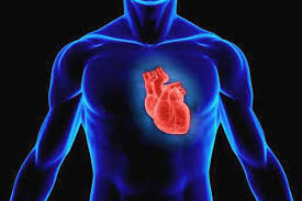 «Наращивание» сердца
