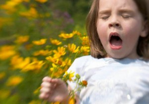 Пыльца как вакцина от аллергии