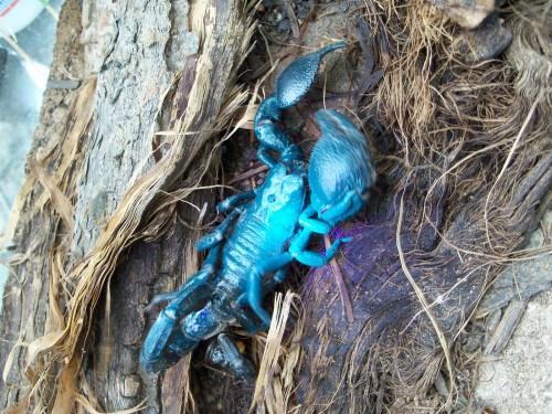 Vidatox и яд скорпиона