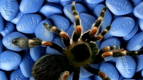 Яд паука и эрекция
