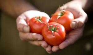 Какая связь между раком простаты и помидорами
