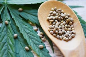 Есть ли весомые причины добавлять в свой рацион семена конопли — разберемся вместе